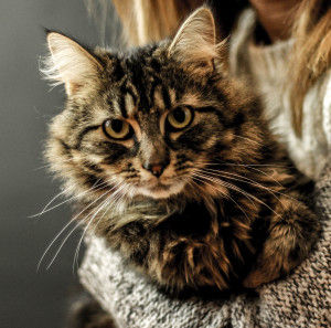 maria s cat